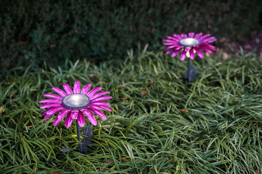 Solar Light Pink Perfection with this set-of-3 African Daisy Desert Steel Giveaway! ARV $171!