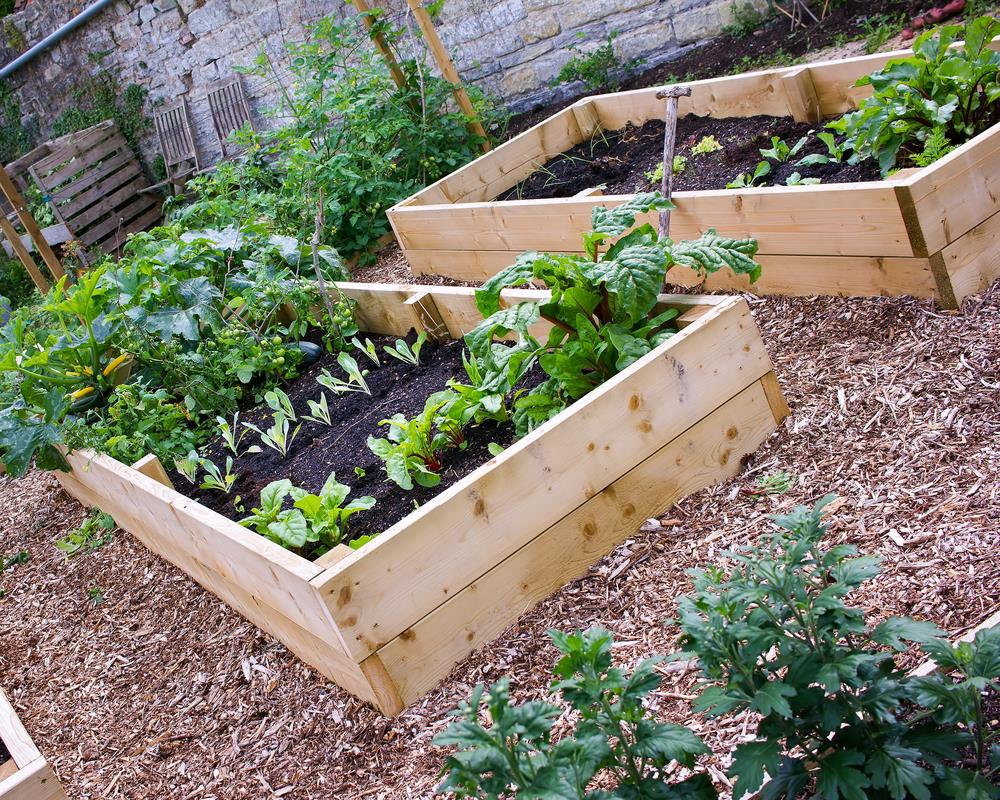 5 reasons you shouldn't plant a garden