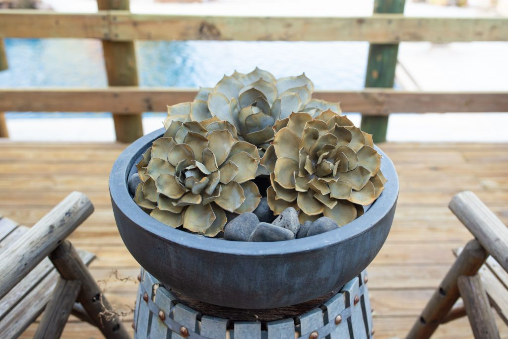 Desert Steel, Metal outdoor sculptures, succulents, blue rose succulents