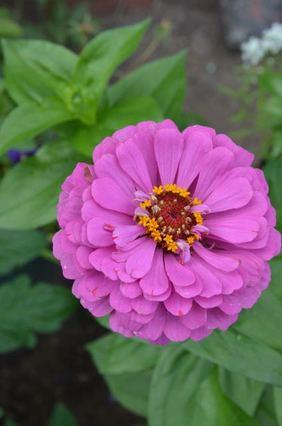 10 late season bloomers