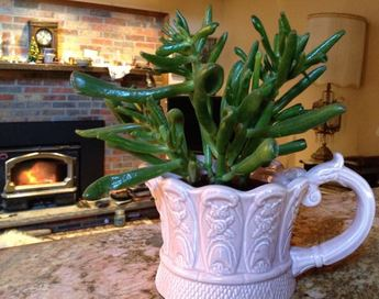 Does your houseplant need repotting?