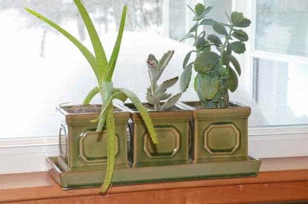 The Secrets of Succulents