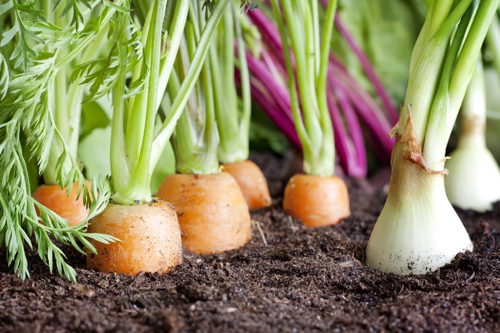 Vegetable families, soil depletion & crop rotation infographic!