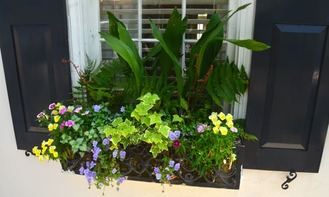 Creating the perfect window box or pot with flowers & greens.