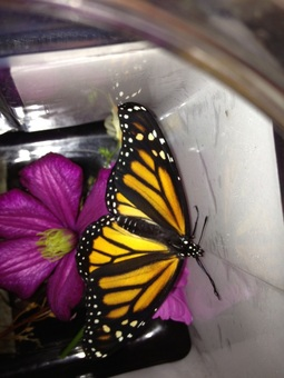 The Return of the Monarchs
