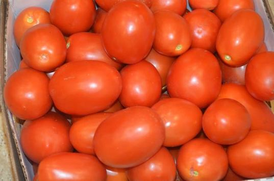 Making tomato sauce with fresh Roma tomatoes