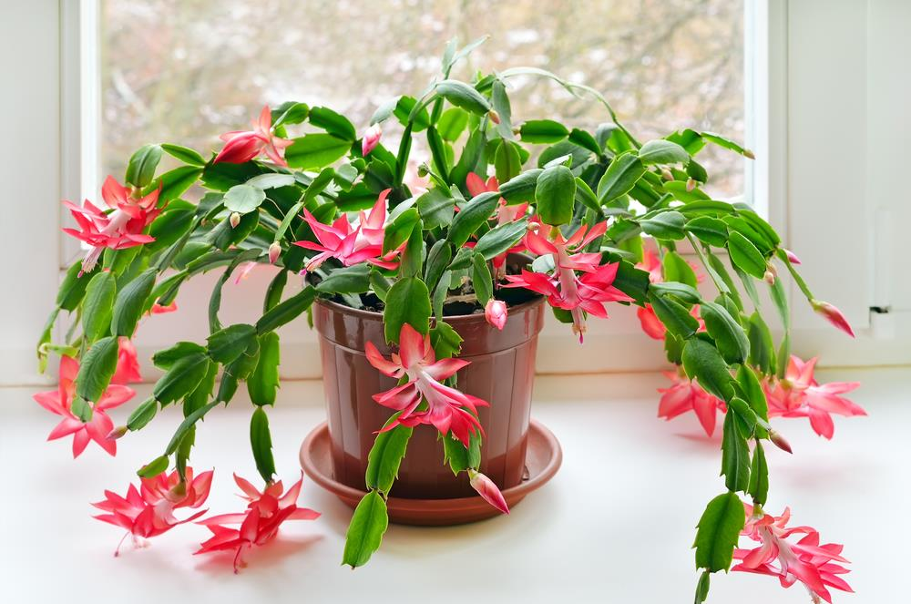 12 more must-have hospitable houseplants!