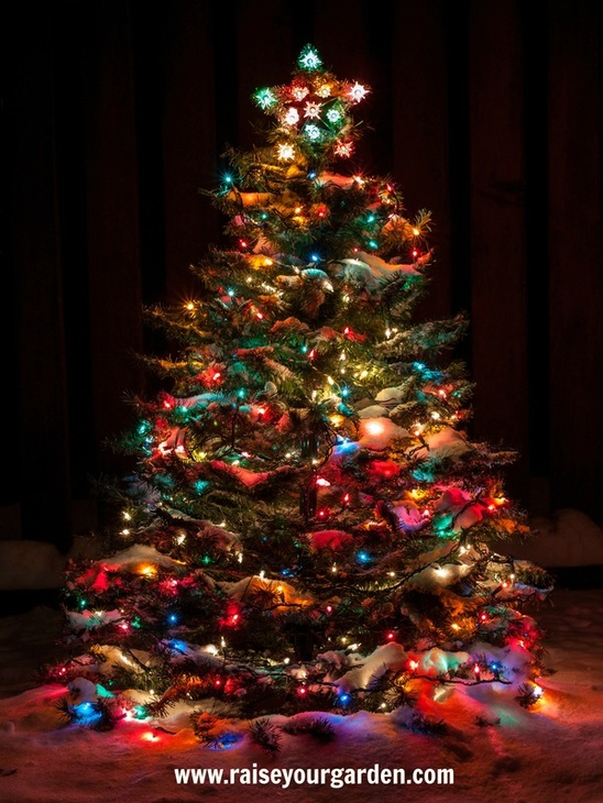 13 foolproof tips to pick the perfect live Christmas tree