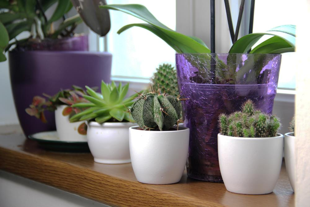 Indoor plant survival guide (let's stop killing our plants!)
