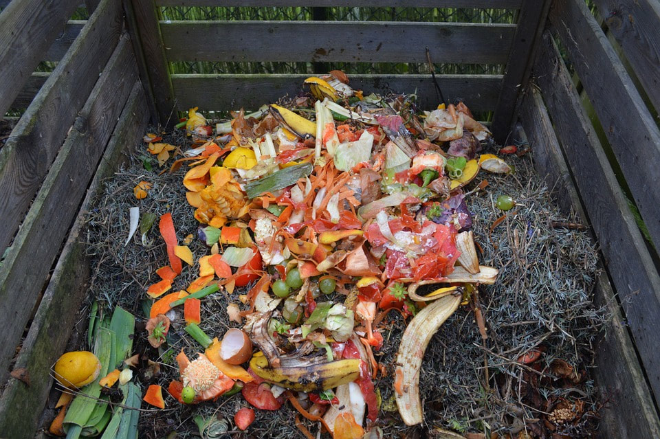 Choosing the best compost bin
