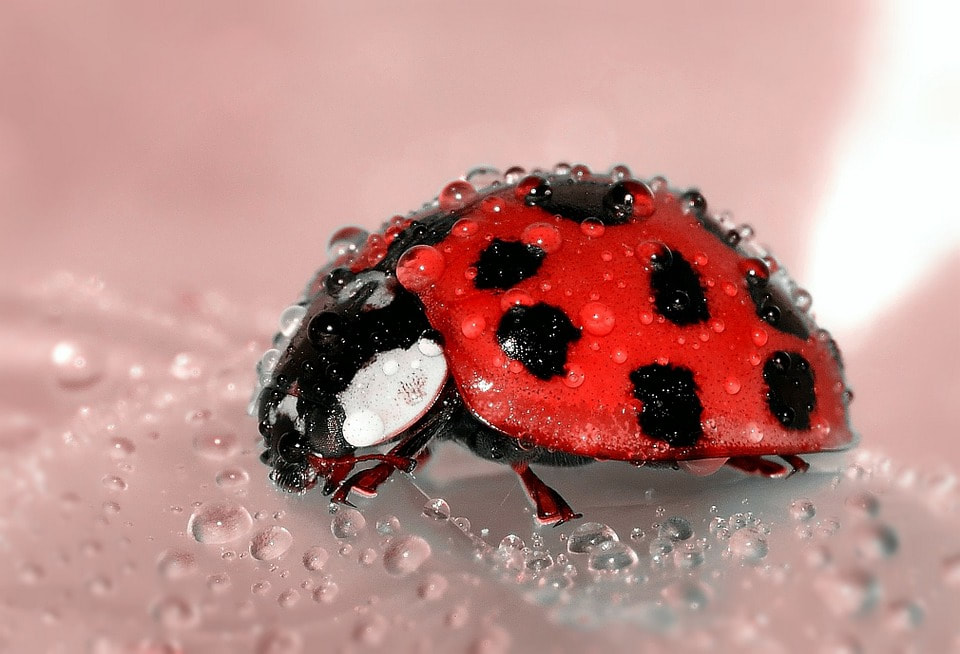 Good bug. Bad bug. Here's the scoop!