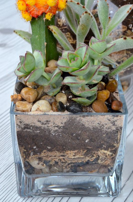See all the visually appealing layers to this DIY succulent and cacti terrarium? Not only are the plants interesting, but the whole piece top to bottom making it a focal point in any room!
