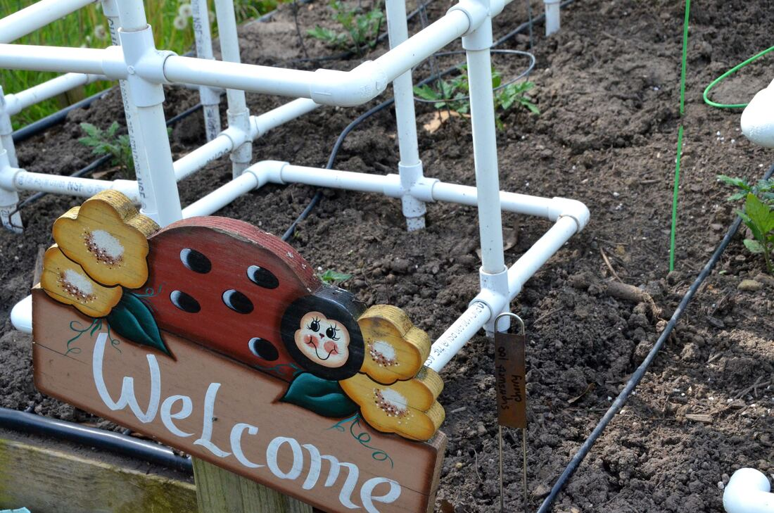 "How does your garden grow? ~ our 2020 Vegetable ""Victory Garden"""