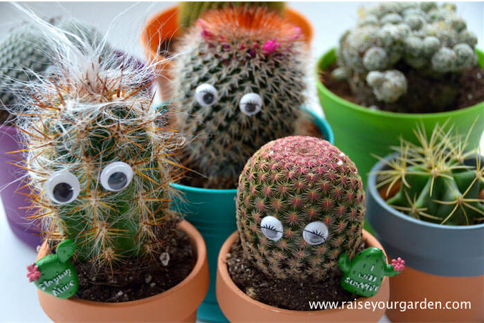 You NEED a cactus ~ 7 riveting reasons why!