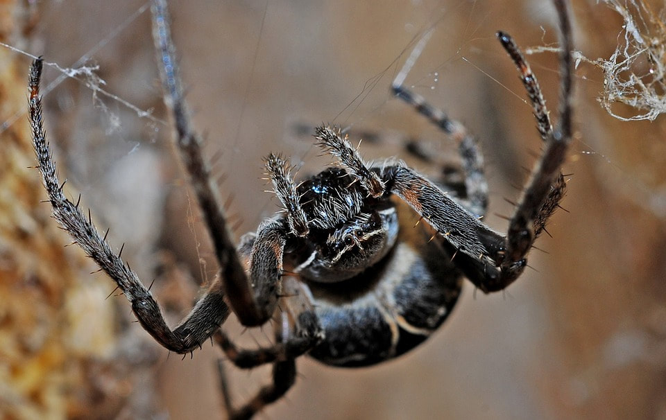 What to do about spiders in your garden