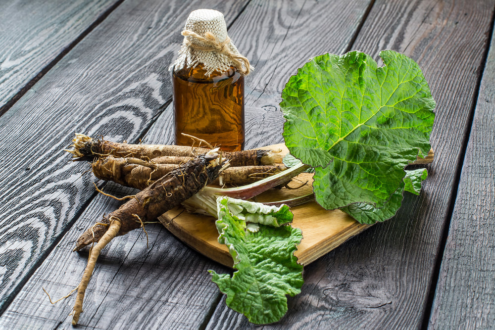 Burdock plant used for medicinal purposes