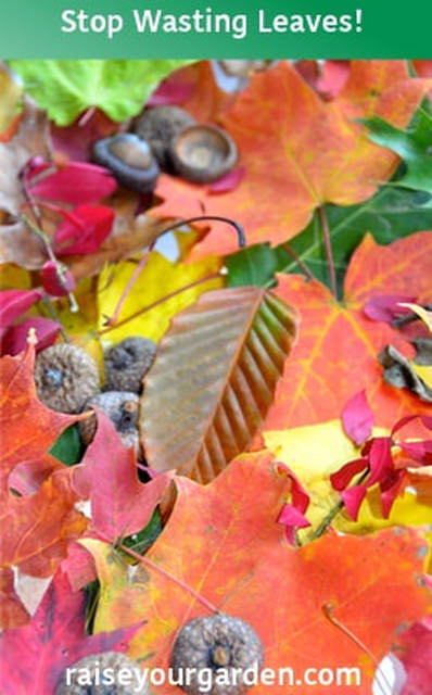 10 ways to put those fall leaves to good use & stop wasting them!
