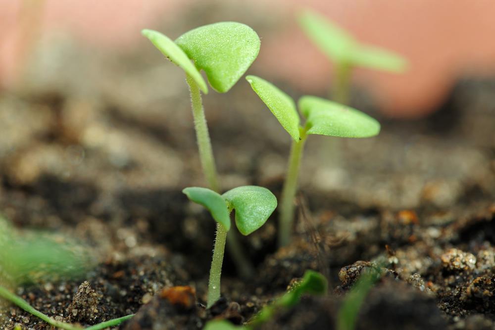 How to increase seed germination rate in your garden!
