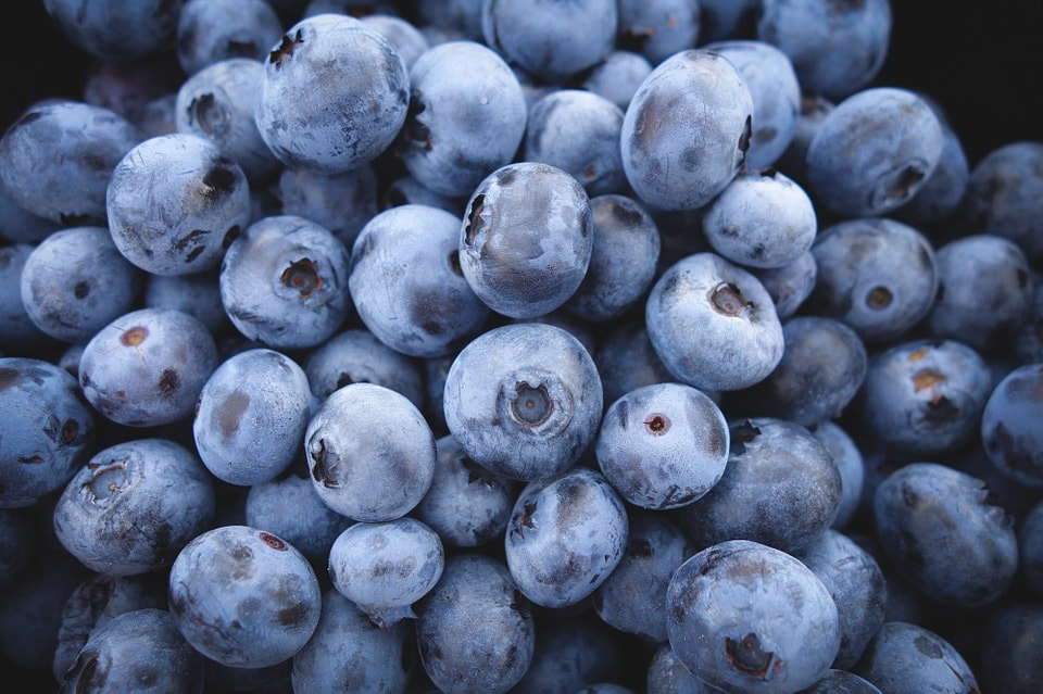 50 fun & fabulous facts about blueberries….
