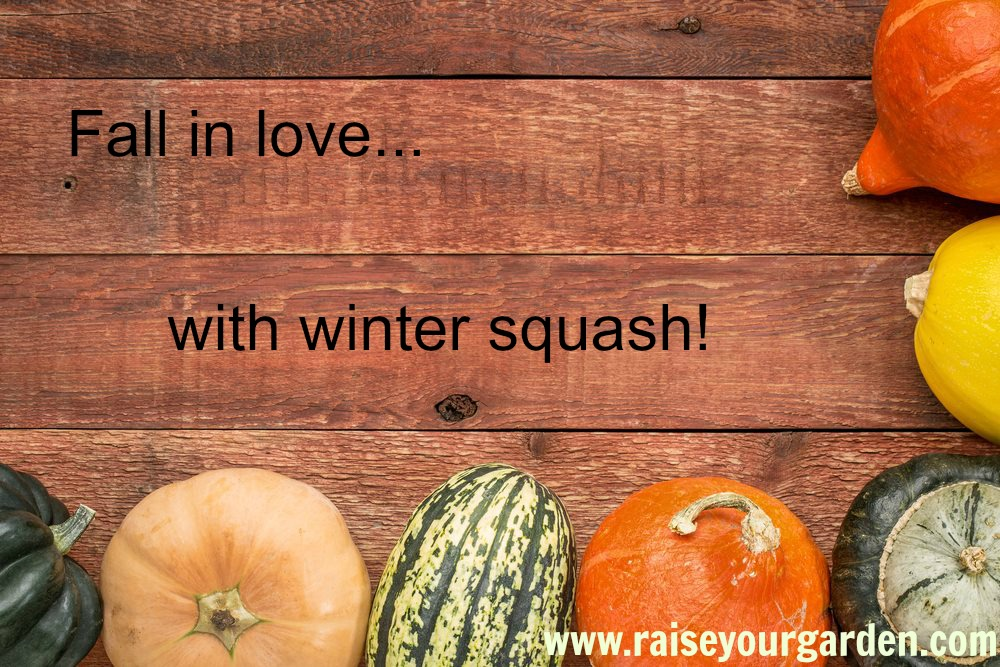 8 winning winter squash to try right now!