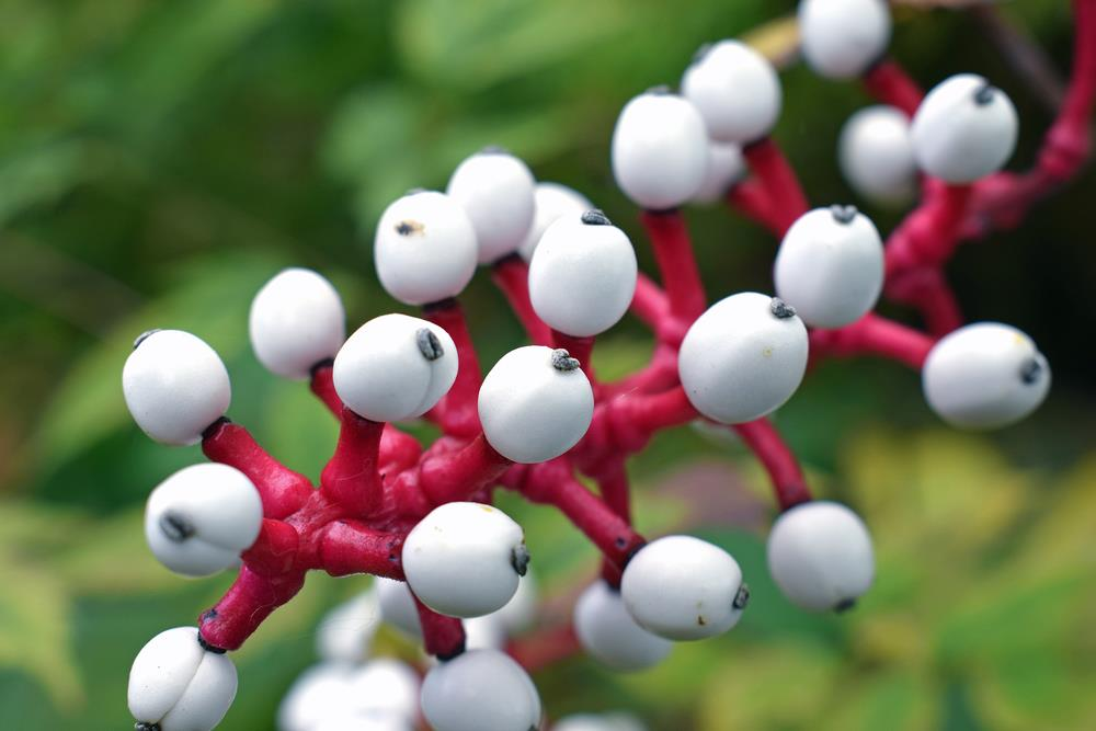 10 toxic plants you don't want in your yard or garden