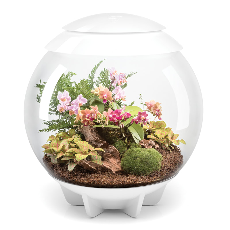 Terrific terrariums with $380 OASE biOrbAIR giveaway!