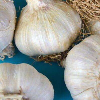 Organic garlic cloves for planting