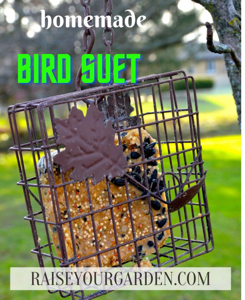 Easy 5 ingredient bird suet