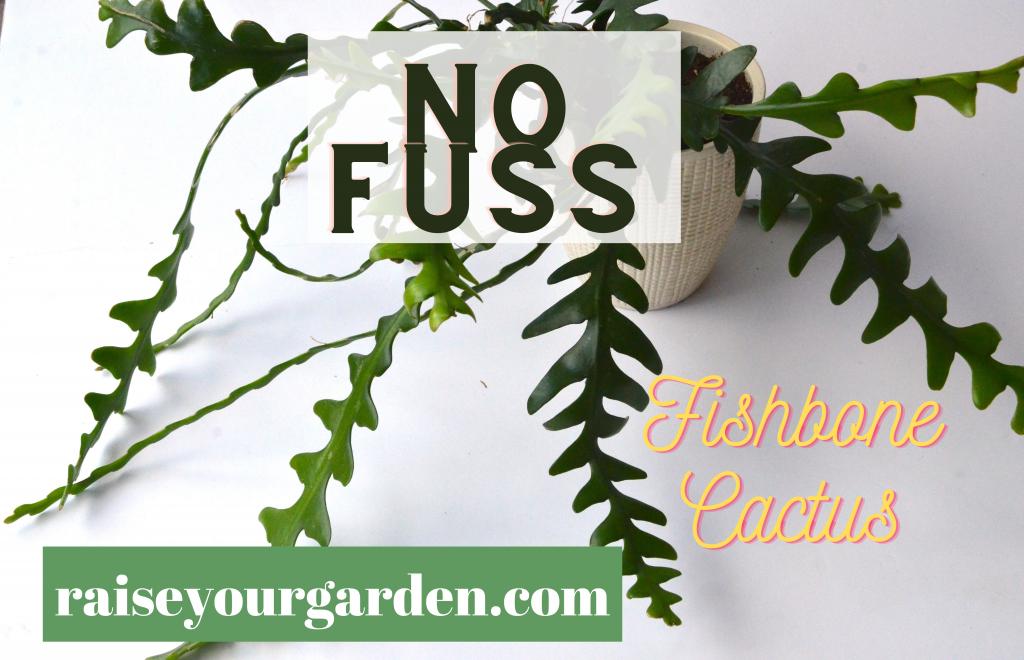 no fuss indoor plants