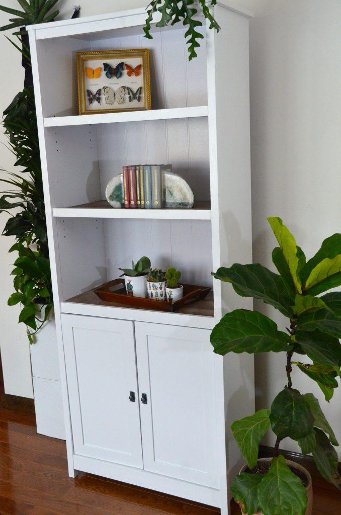 Plants on bookshelves