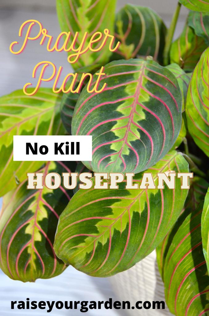 no kill houseplants