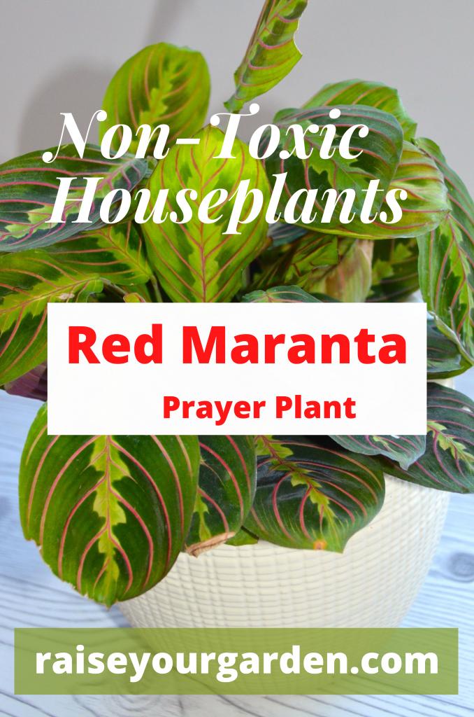 Non toxic plants