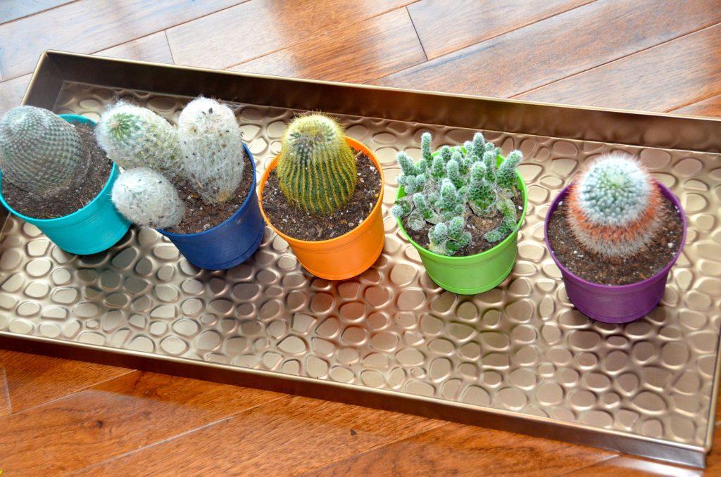 Cacti love the versatile boot tray