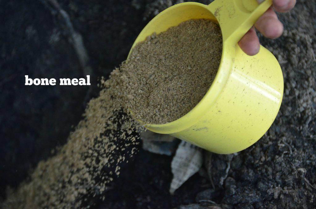 bone meal to grow the