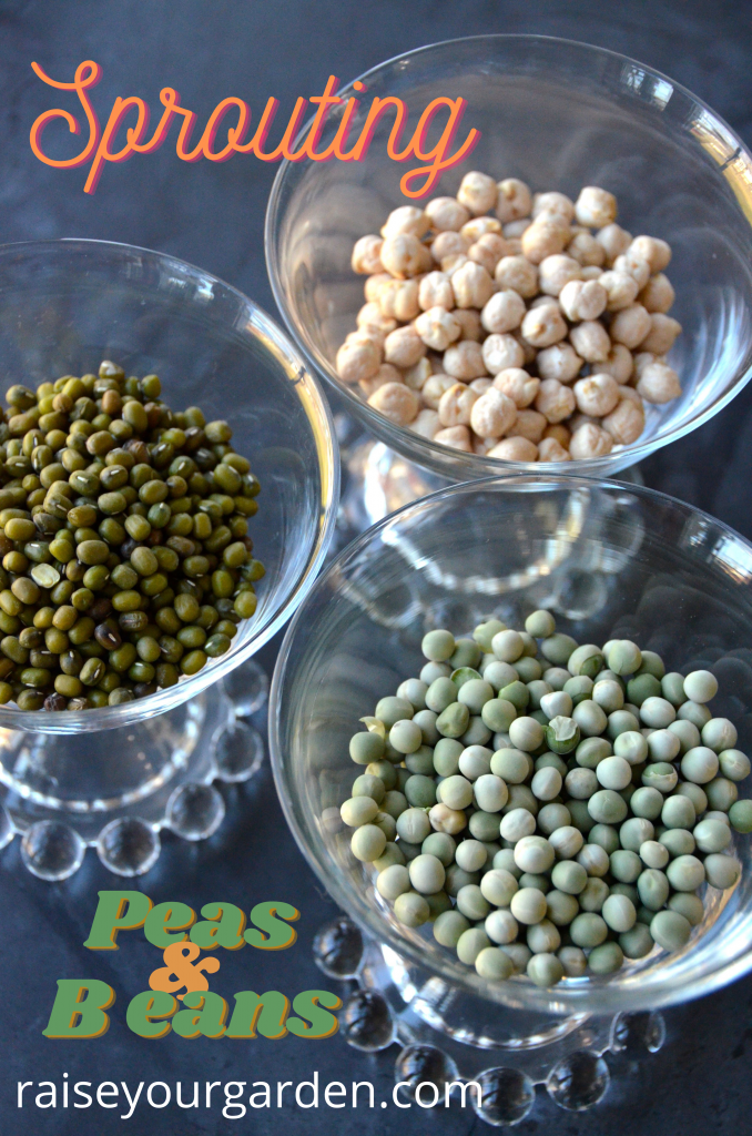 Where to get peas and beans to sprout