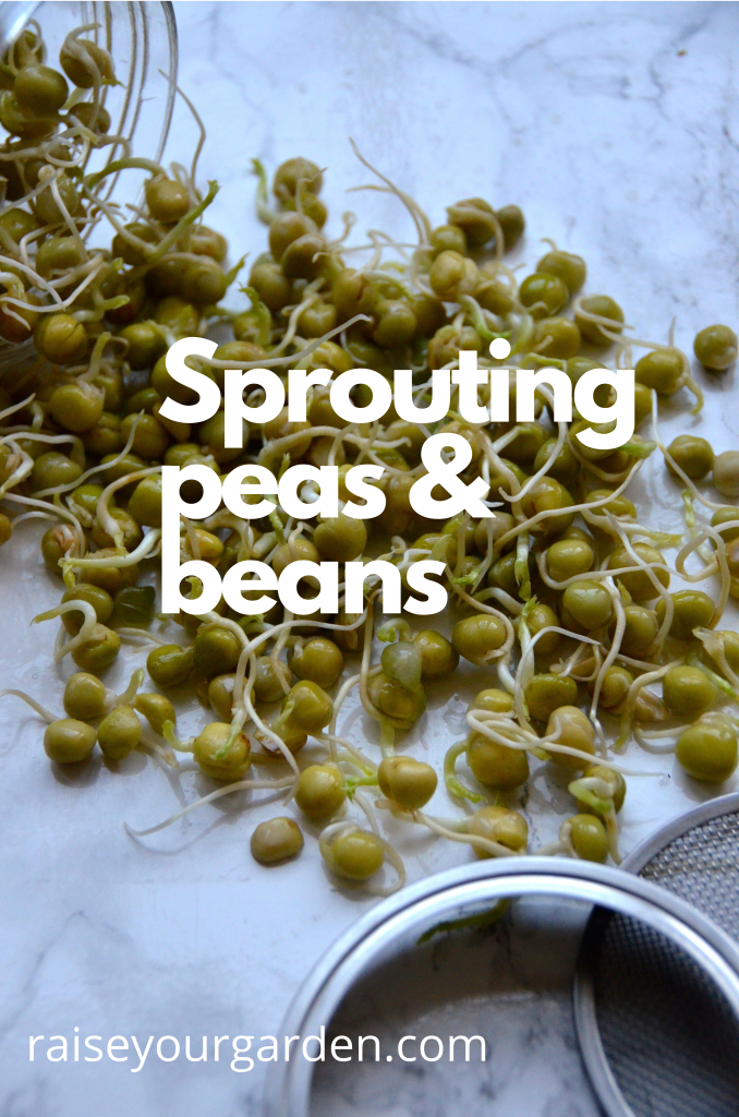 Sprouting peas and beans