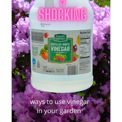 9 shocking ways to use vinegar in your yard & garden!