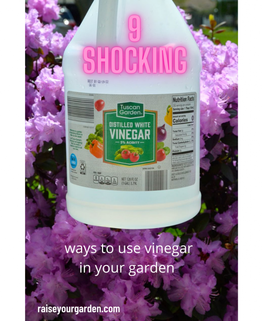 ways to use vinegar in your yard and garden