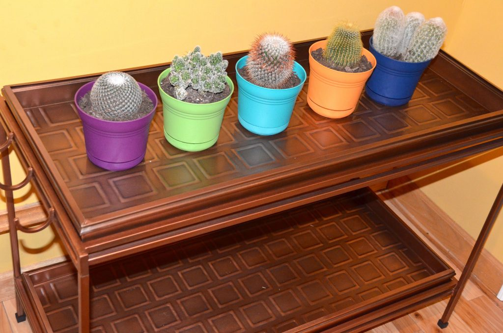 cacti on boot tray