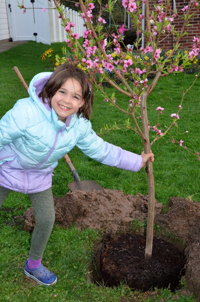 Plant your peach tree vertically