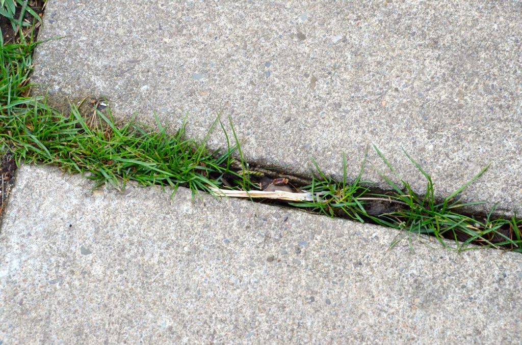 Use white vinegar to kill weeds in the sidewalk