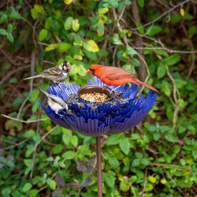 Bird feeding with Desert Steel 3 winner peony bird feeder giveaway!
