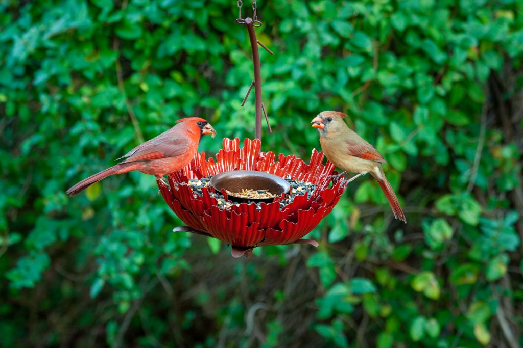Birds love meal worms