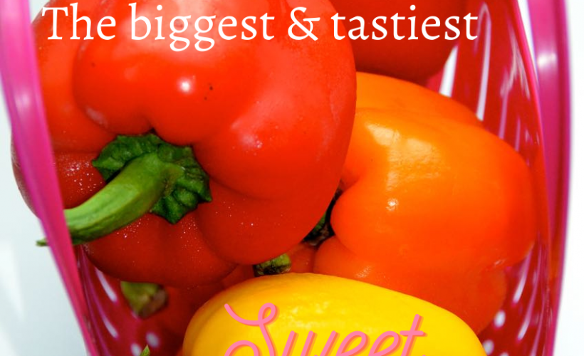 grow the biggest and tastiest sweet peppers