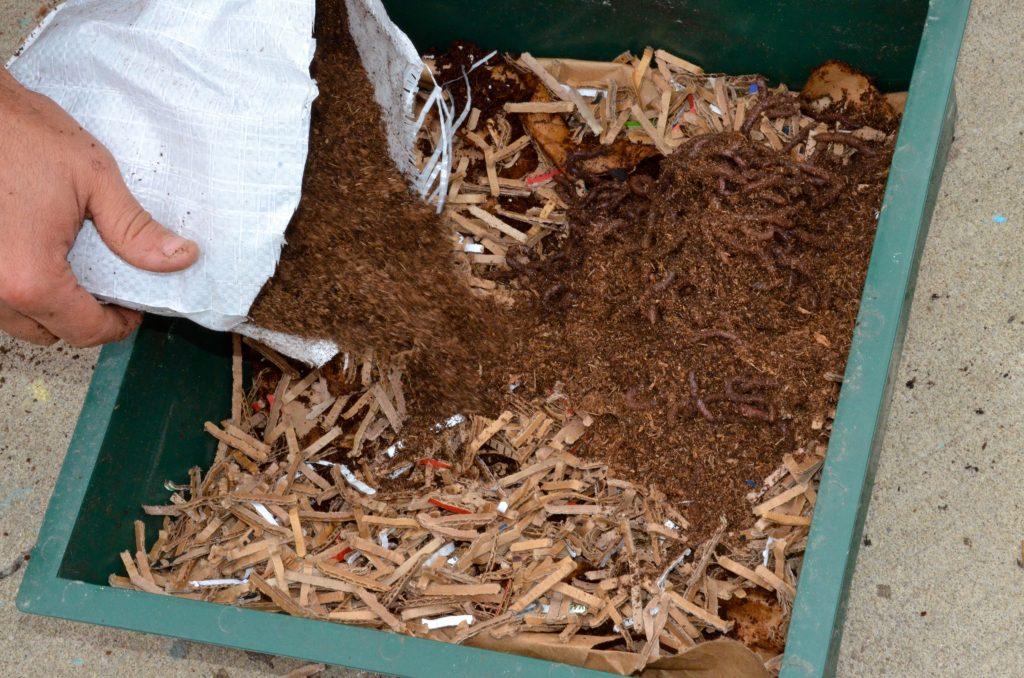 worm poop in compost bin