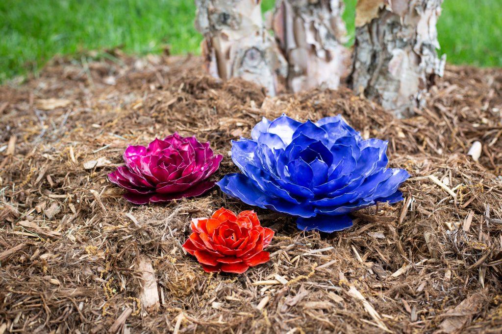 Mini rose succulents