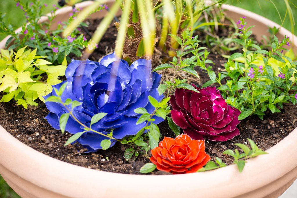 Mini rose succulent