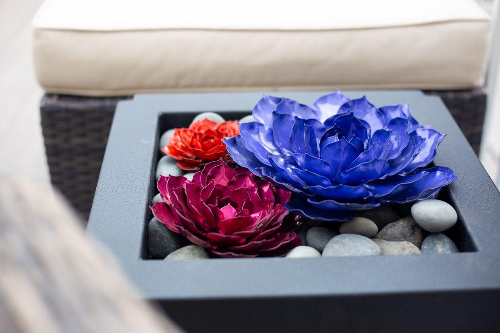 mini rose succulents used indoors